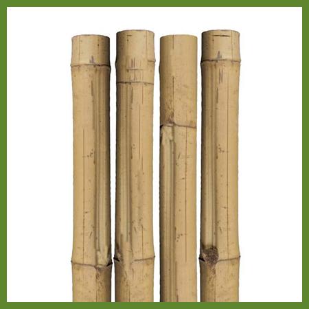 Tuteurs de bambou