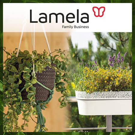 Lamela rosa / magnolia