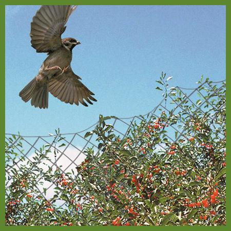 Filets oiseaux