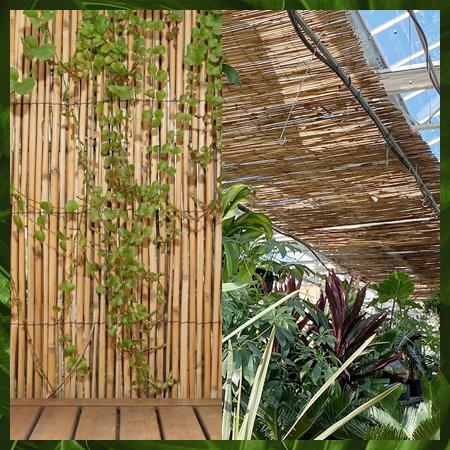 Clôtures de bambou