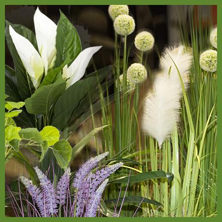 Plantes permanentes
