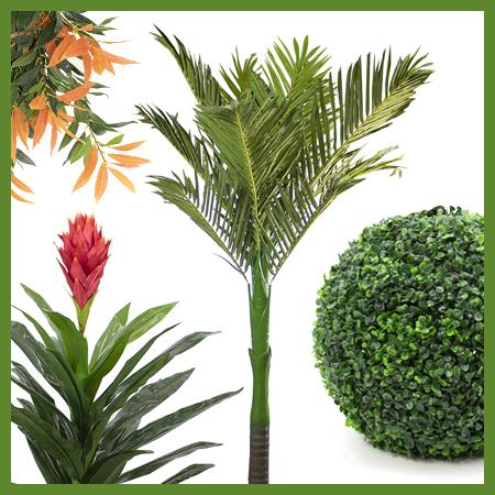 Plantes et arbres permanents