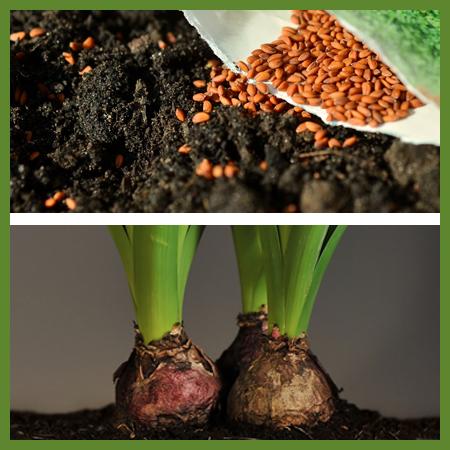 Seeds, bulbs & herbs