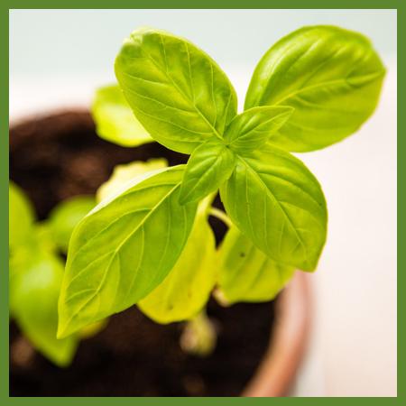 Kit de croissance - herbes